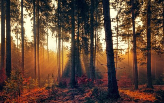 Some Stunning Pictures of Forest Landscape